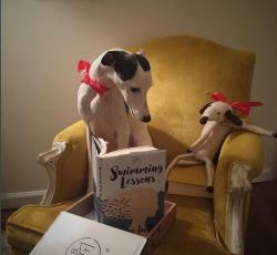 dogs-instagram