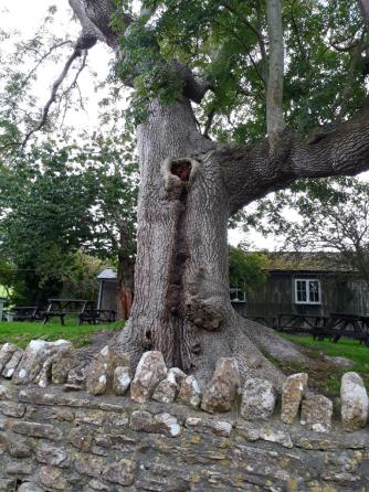 FF Tree